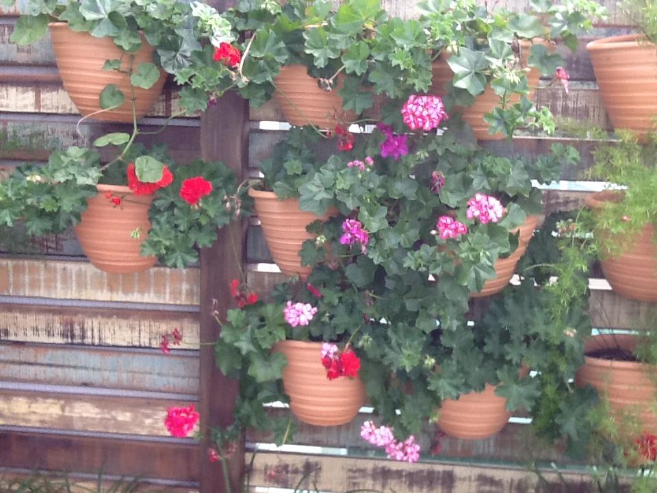 para quem tem pouco espaço mas gosta de plantas é fazer um jardim